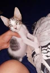 Doa-se 2 gatinhos (macho e femea)