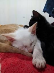 Título do anúncio: Adoção consciente Gatos