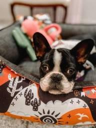 Título do anúncio: Bulldog com 4 meses vacinada