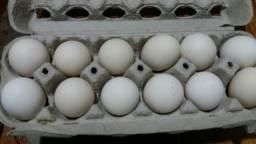 30 ovos Páduana polonês galado