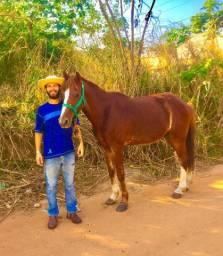 Troco dois Cavalos de marcha picada