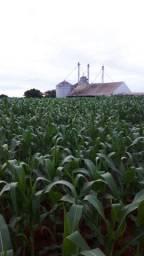 Venda* Excelente Fazenda em Tabopora - MT