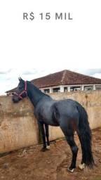 Cavalos: Manga Larga Machador, burros , Mulas,