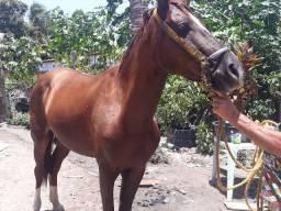 Um cavalo e um poldo