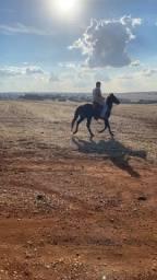 Título do anúncio: Cavalo preto QM
