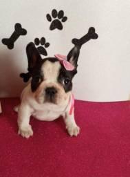 Lindas bebês de Bulldog francês