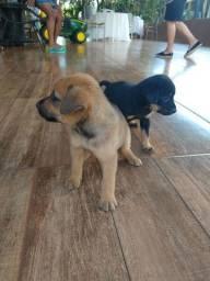 Doação filhotes de cachorro