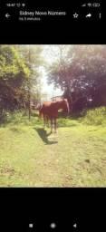 Cavalos com sela de montaria