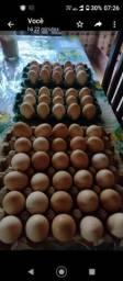Ovos galinha capoeira e temos também galados