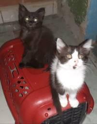 Título do anúncio: Gatinhas para a adoção
