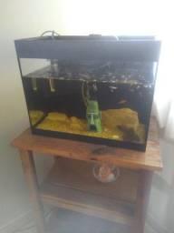 Título do anúncio: Vendo aquário, com bomba e termostato