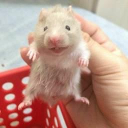 +++++ Hamster +++++