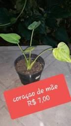Plantas da Zô