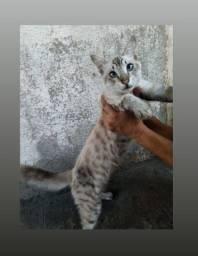 Título do anúncio: Gato macho para adoção