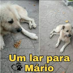 Adoção cachorro