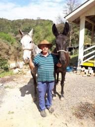 Vendo cavalo e mula