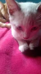 Adoção de gatinhas ( fêmeas Aprox. 4 meses de idade)