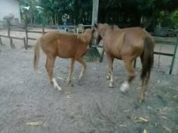Égua com um pordô de 5 meses