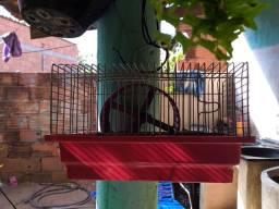 Casinha de hamster com rodinha de correr