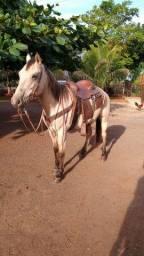 Título do anúncio: Cavalo baio QM