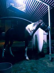 Título do anúncio: Cavalo de passada pizando muito