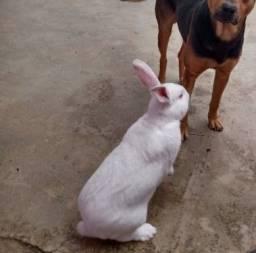 Meu coelho fugiu