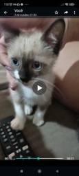 Título do anúncio: Gatinhos para adoção
