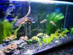 Título do anúncio: Vendo aquario completo CICLIDEOS