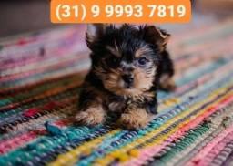 Título do anúncio: Canil lindos,yorkshire, lhasa apso, shihtzu, basset, poodle, beagle