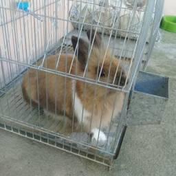 Vendo este coelho com a gaiola
