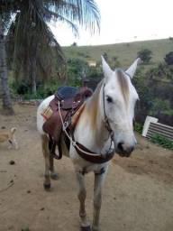 Cavalo jeitoso