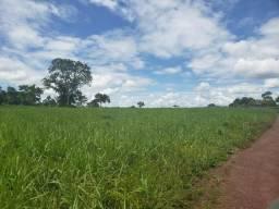 Fazenda 1.240 hectares em Jangada