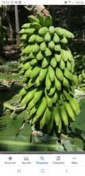 Vende - se bananas Prata