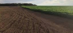 Título do anúncio: fazenda 770 ha Grãos