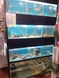 Vendo samp de aquários r$3.000