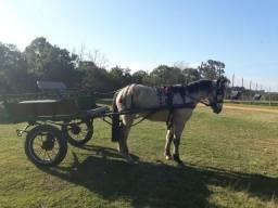 Cavalo e carrinho
