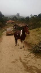 Pampa Mangolino