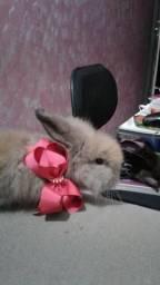 Coelhinha muito carinhosa