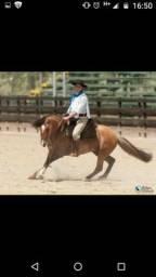 Venda de cobertura de cavalo com 10 registros de mérito