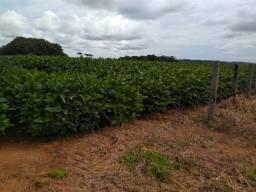 Fazenda a Venda em Alta Floresta-MT