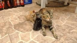 Título do anúncio: Doação de gatos