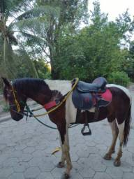 Cavalo pampa magalarga machado