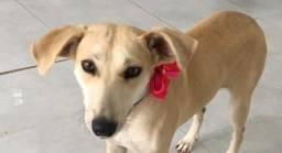 Penélope (Cão fêmea para adoção)