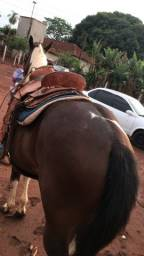 Título do anúncio: Cavalo Paint Horse Registrado 7/8