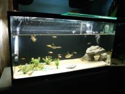 Disponível aquario  completo