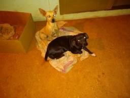 Doação de duas cachorrinhas