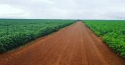 Fazenda de dupla aptidão Porto alegre do Norte jo 155