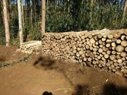 Lenha de eucalipto vendo 6m