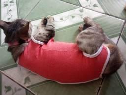 Roupa pos operatório gato e cachorro