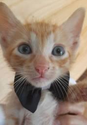 gatinhos pra adoção responsável